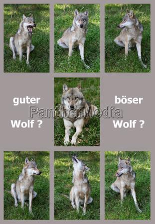 god ulv darlig ulv