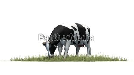 dyr landbrug maelk ko kvaeg bondegard