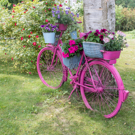 trae have hjul blomst plante vaekst
