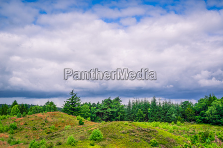 cloudy weather over green trees