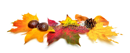 autumn leaves and chestnuts on white