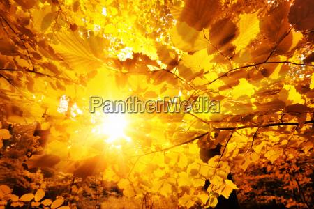 the sun shining through autumn leaves