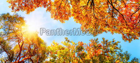 tree canopy bla himmel og sol