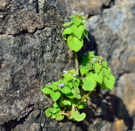 plant growing from rock