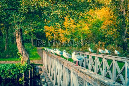seaguls on a small bridge