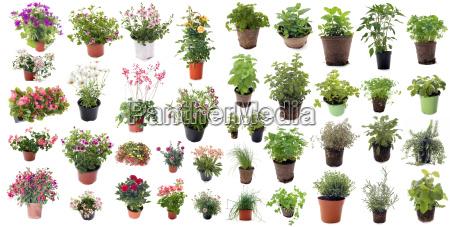 aromatiske, urter, og, blomster, planter - 15360617