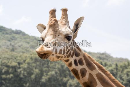 giraf look