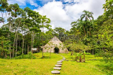 tur rejse miljo trae jungle brasilien