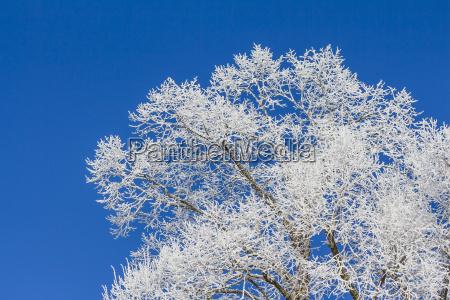 trae vinter grene kviste juletid jul