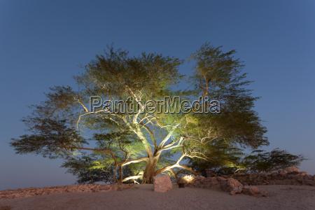 tree of life bahrain