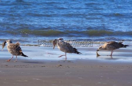 group gulls on the beach with