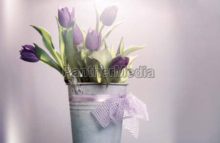 pink tulipaner i retro spand