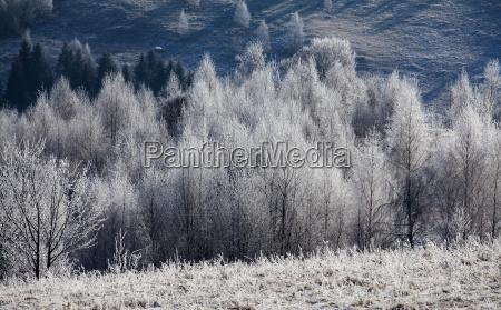 winter mountain landscape in the carpathians