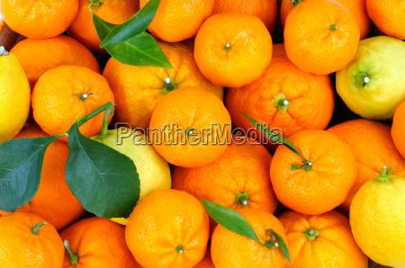 citrus frugter i kurven