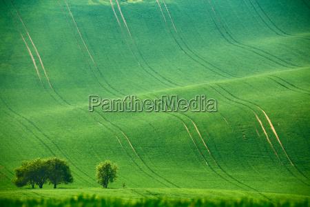 gronne forarshills arable lande i tjekkiet
