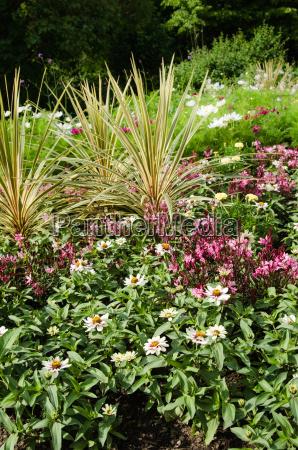varierede blomster i en have
