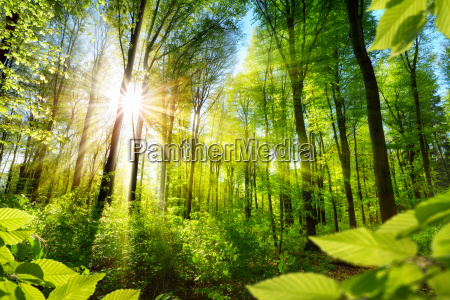 solbeskyttede lovtraeer i skoven