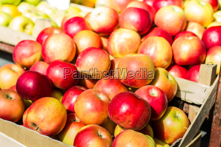 apple fruit sundt