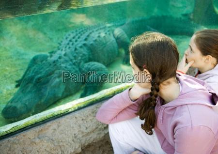 venskab fritid akvarium dyrepark dyrehave se