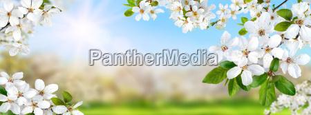 forars paradis med hvide blomster sol