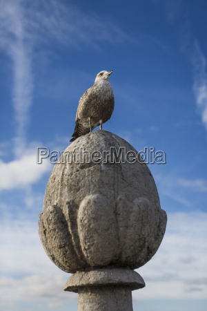 seagull siddepinde pa ornament