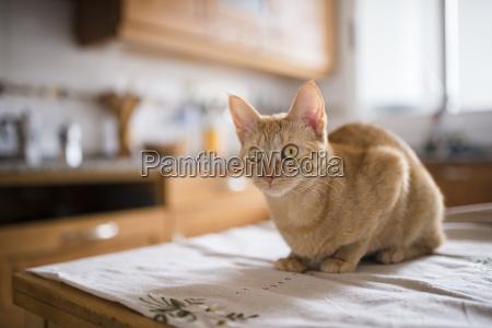 portrait of starring cat sitting on