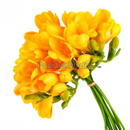 fritlagt romantisk blomst blomster plant plante