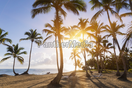 dominican rebublic tropical beach with palm