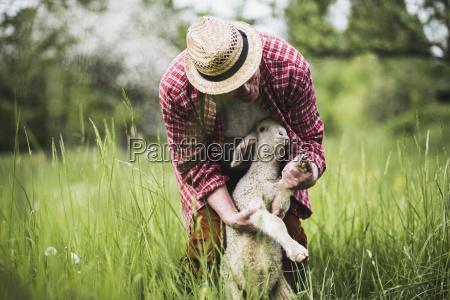 shepherd undersoge lam pa graes