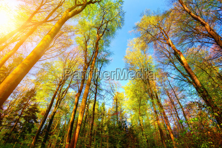 colorful scene in the forest with