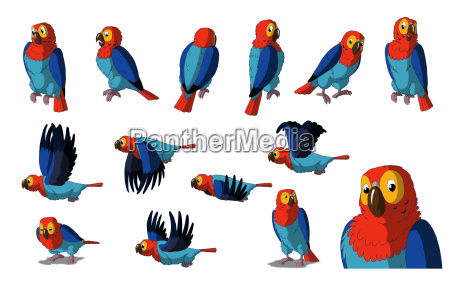 macaw papegoje isoleret pa hvid baggrund
