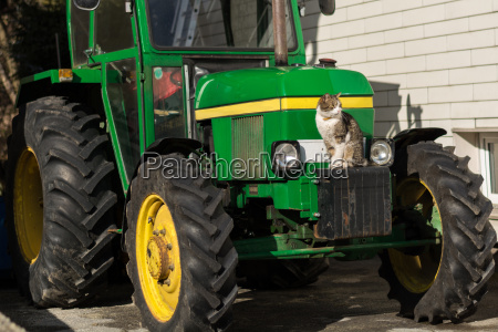 cat at the favorite place tractor