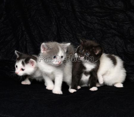 kittens on black background
