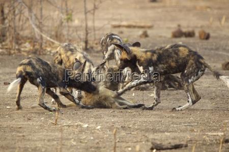 fare nationalpark udendore udendors eventyr wildlife