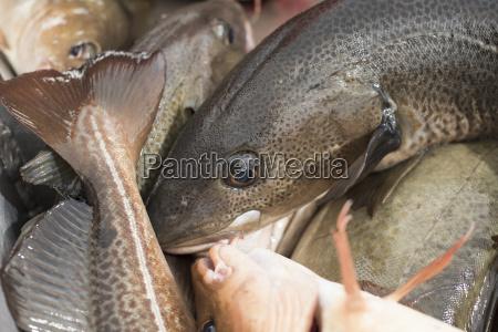 makrooptagelse naerbillede fisk og skaldyr ingen