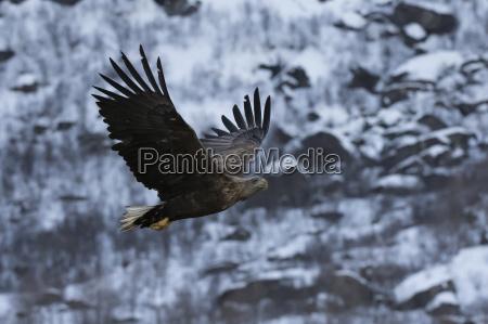 tur rejse vinter dyr fugl norge