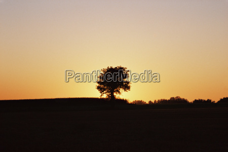 tree in a field at sunset