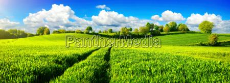 landlig idyl panorama med brede gronne