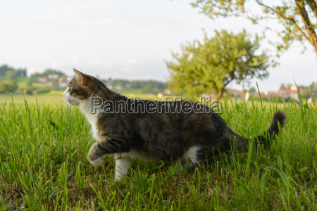 cat sneaks a purring cat