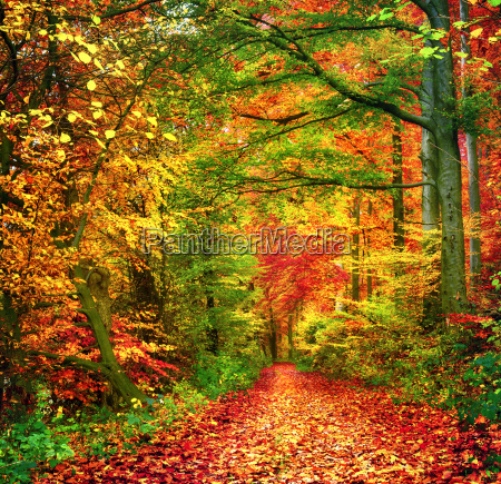 colors of forest in the autumn
