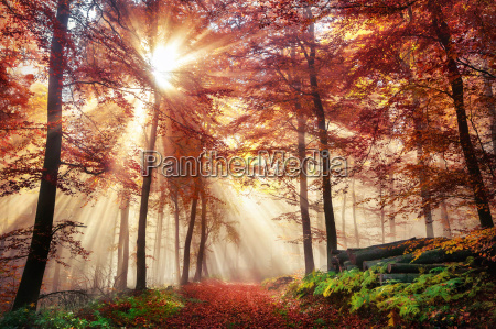 fascinating light mood in a colorful