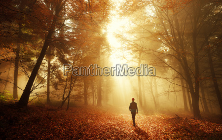 walk in the forest with stunning