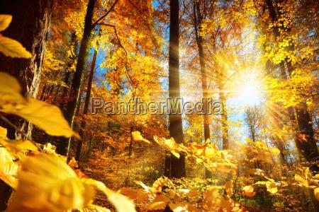 radiant efterar i skoven med masser