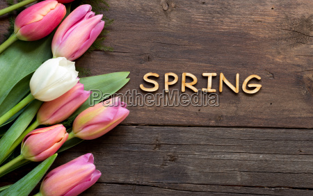 pink tulipaner og ordet forar