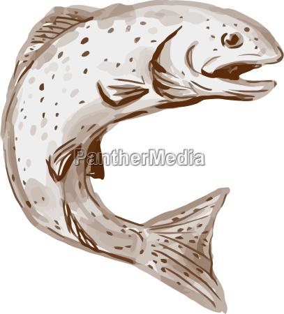 fisk wildlife forel laks akvarel farvestof