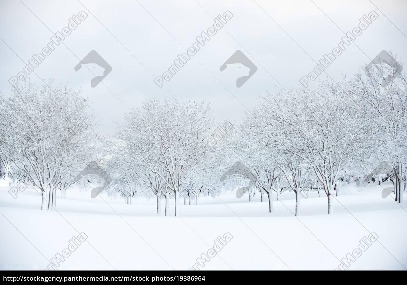 urban, løvfældende, lund, lund, dækket, af - 19386964