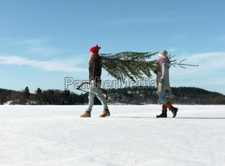 par, med, juletræ - 19544968