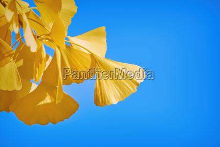 blad miljo blade flora botanik gren