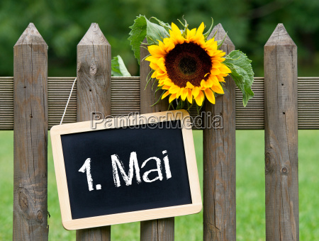 segnale vacanza fiore pianta festeggiare festeggia