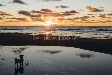 danmark nordjylland hund pa rolig strand
